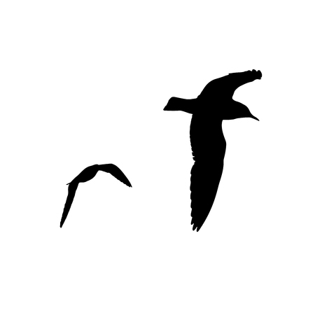 Set of seagull silhouette on white background collection Illustration