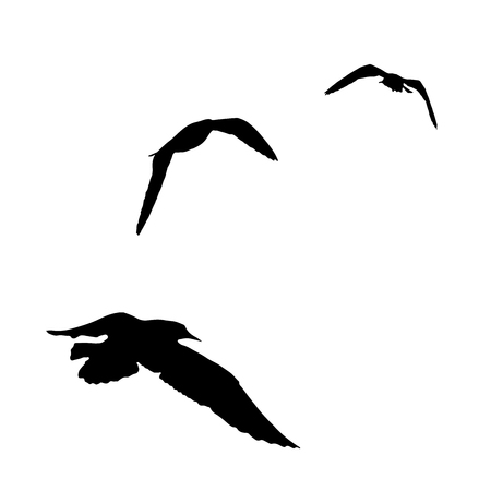 Flying seagull silhouette on white background collection