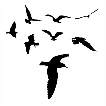 Segelfliegen Silhouette auf weißem Hintergrund Sammlung Standard-Bild - 72897243