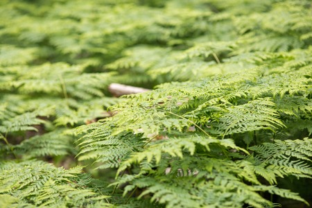 great green bush of fern in the forest Stock Photo