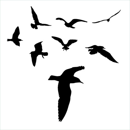 set - seagull silhouette on white background collection.