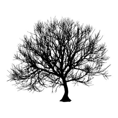 tamarindo: Árbol seco negro silueta de invierno o otoño sobre fondo blanco. ilustración