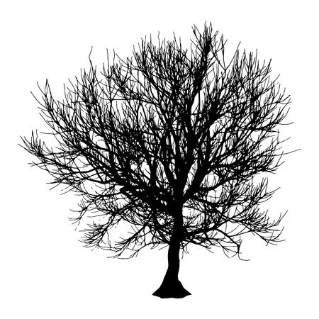 Black dry tree winter or autumn silhouette on white background.  illustration