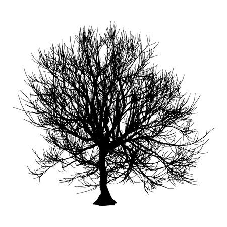 Black dry tree winter or autumn silhouette on white background.  illustration.