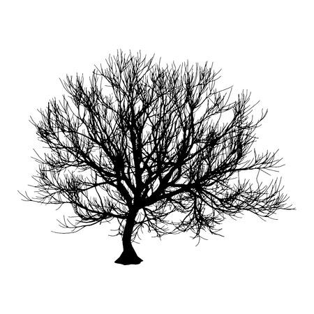 Black dry tree winter or autumn silhouette on white background. Vector eps10 illustration.