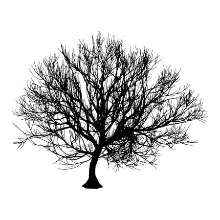 Black dry tree winter or autumn silhouette on white background. Vector eps10 illustration.