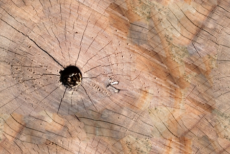 Cracked Wooden stump texture top view with hole. Seamless background texture.