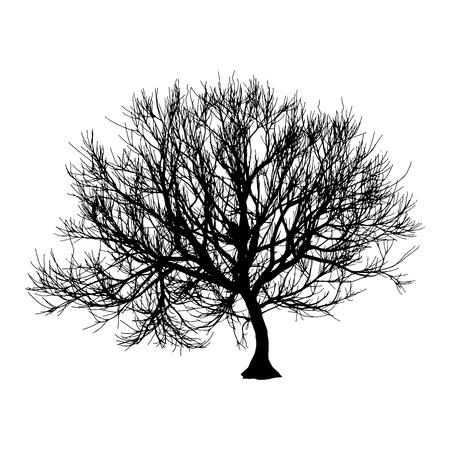 Silhouette d'arbre sec noir hiver ou automne sur fond blanc.