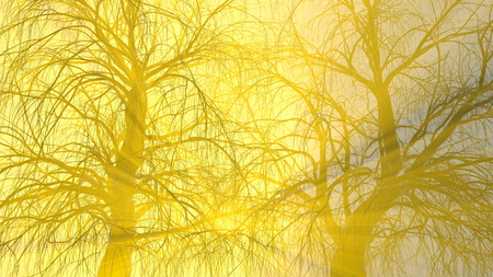 two trees without leaves in fog or mist lit by bright orange sun god rays . 3d illustration. Travel and camping concept