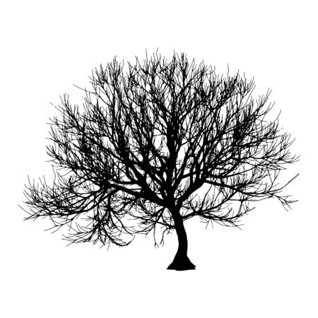 Black dry tree winter or autumn silhouette on white background. Vector  イラスト・ベクター素材