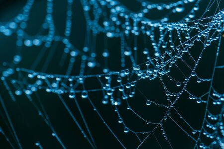 Close-up of a web with dew drops. Morning spring photo in nature.