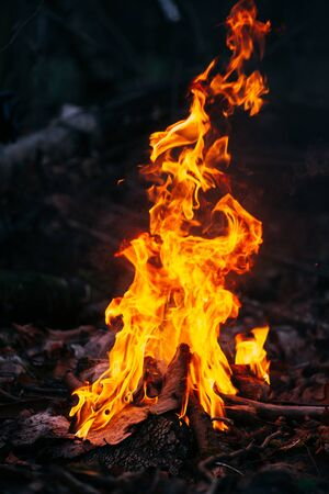 Burning wood at evening in the forest. Campfire at touristic camp at nature. Barbeque and cooking outdoor fresh air. Flame and fire sparks on dark abstract background. Concept of safety and responsibility to nature. Banque d'images
