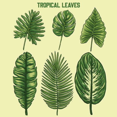some vector tropical leaft designs