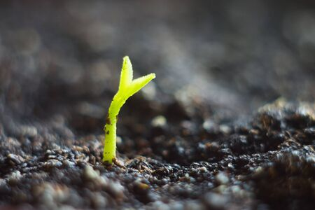 Birth of new plant in ground  Close-up Stock Photo