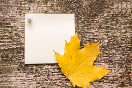 blank paper sticker with autumn leaves on old wood background photo