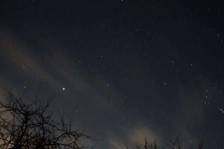 Evening stars on sky with tree silhouette Stock Photo