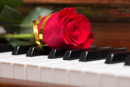 abstract music background: Red rose lying on piano keyboard. Abstract music background