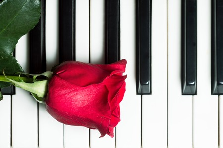 love music: Red rose lying on piano keyboard. Abstract music background. Top view image