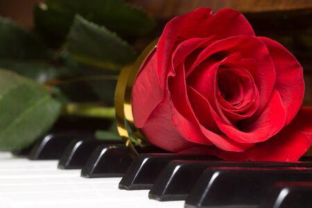musik hintergrund: Red sch�ne Rose auf Klaviertastatur. Musik-Hintergrund