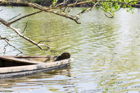 swamped: Old waterlogged boat at the pond with trees around