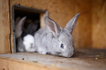 hutch: Adorable young bunny in a big wood cage at farm house. Cute small rabbit in hutch
