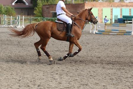 Un jinete del caballo en la competición de salto ecuestre Foto de archivo