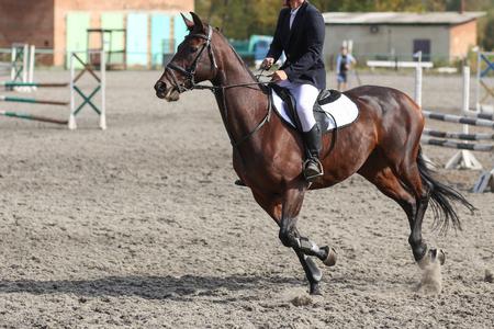 Un cavaliere in equestre concorrenza salto ostacoli