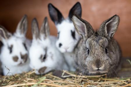 Nieuwsgierig grijs konijntje met zijn siblings in de landbouwbedrijfkooi.