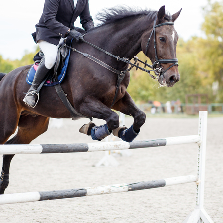 fense: Black horse with rider taking an obstacle on show jumping