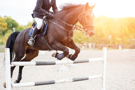 Show jumping close up image. Male horse rider jumping over hurdle on competition