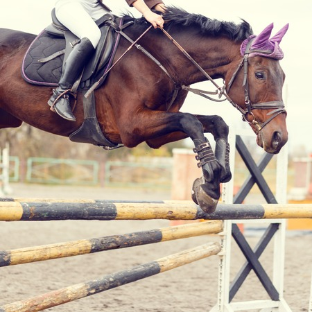 Close up image of jumping horse over hurdle bar on show jumping competition. Warm color toned image