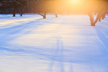 snowdrifts: Sunrise in a winter garden with long shadows on snowdrifts