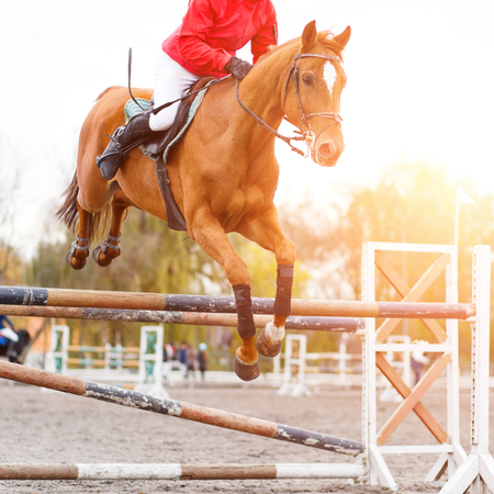 Rider performing jump on sorrel horse over hurdle Stock Photo - 81813133