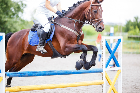 Bay horse with rider jumping over obstacle