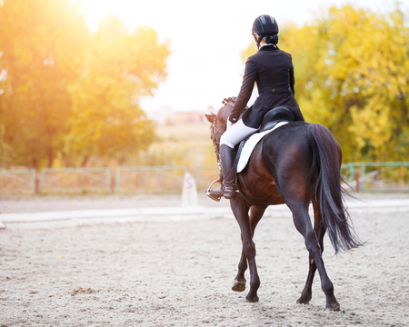 Young rider woman on bay horse performing advanced test on dressage competition. Rear view image of equestrian event background with copy space Foto de archivo