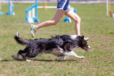 Border collie with girl handler in agility trial. Standard-Bild - 105525588