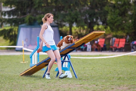 Dog on the seesaw obstacle in agility competition
