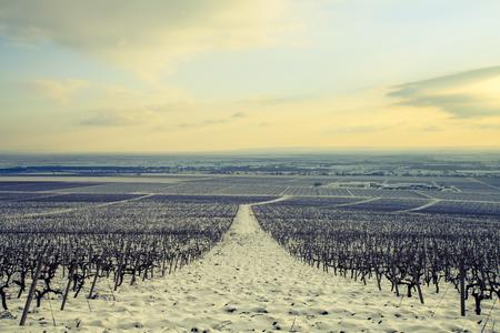 冬の畑のある風景します。 写真素材