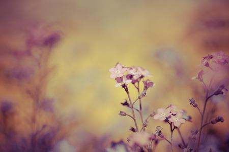 春の花マクロ