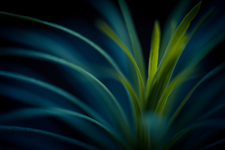 soft   focus: Green plant close up. Abstract bacground. Soft Focus, SDOF. Stock Photo