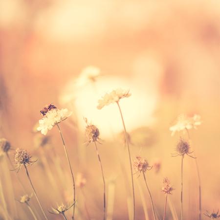 colores calidos: Abeja en la flor blanca en el parque. Colores c�lidos. Plaza de la composici�n.
