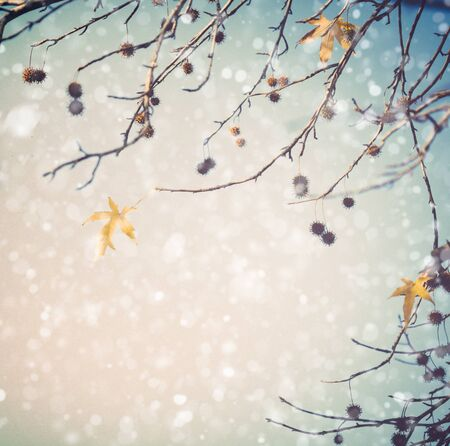 snow falling: Tree branches in winter with snow falling Stock Photo