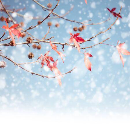 neige qui tombe: Les branches des arbres en hiver avec des chutes de neige