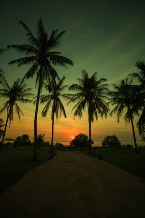 Silhouettes of palm trees with beatuful sunset on koh pangan