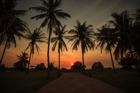 beatuful: Silhouettes of palm trees with beatuful sunset on koh pangan