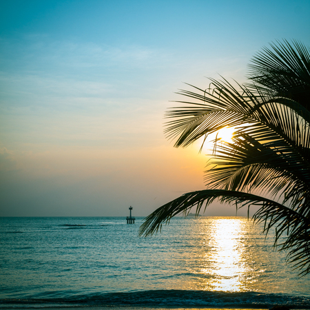 beatuful: Silhouette of palm tree with beatuful sunset on koh pangan. Square image.