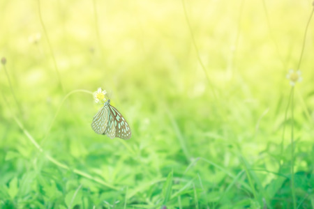 free image: Macro shoot of butterfly on yellow flower with blured background. Horizontal image.