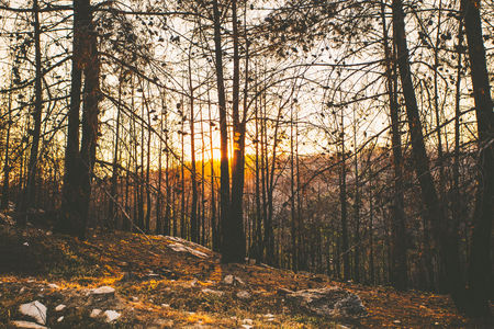 Sunset in beautiful forest.