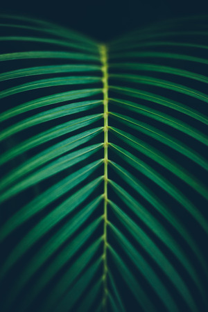 Palm leaf background. Vertical orientation. Reklamní fotografie