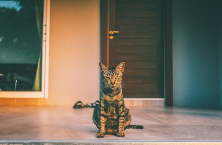 회색 고양이 초상화 나 집 입구 앞.